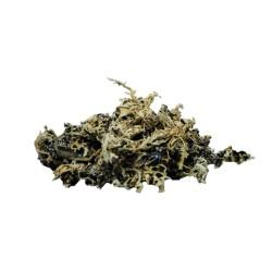 Satvik Stone Flower Spice...